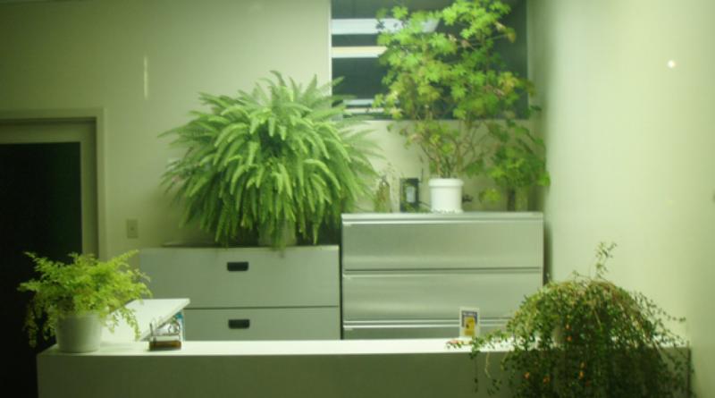 grønt kontor